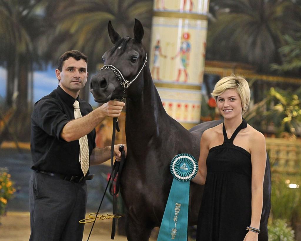 Black-Arabian-horse-The-Black-Pearl-LSA